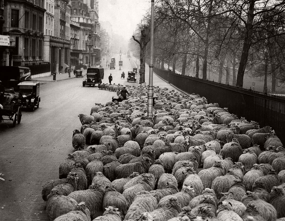 1931  Heading down Piccadilly from Hyde Park to Green Park.  Image: Fox Photos/Getty Images