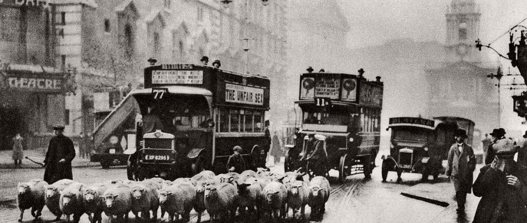 Vintage: Sheep on the Streets of London (1920s – 1930s)