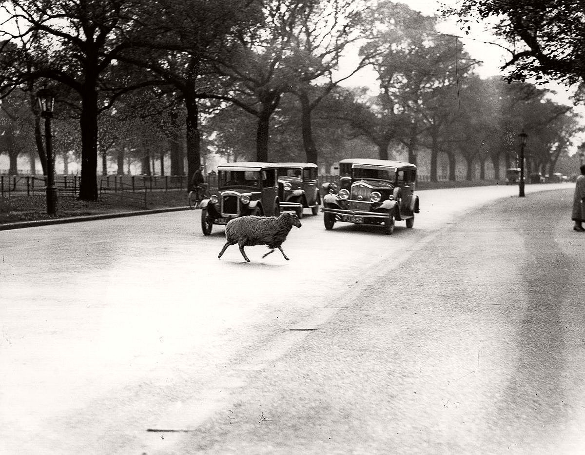 1933  A straggler dodges traffic in Hyde Park.  Image: Fox Photos/Getty Images