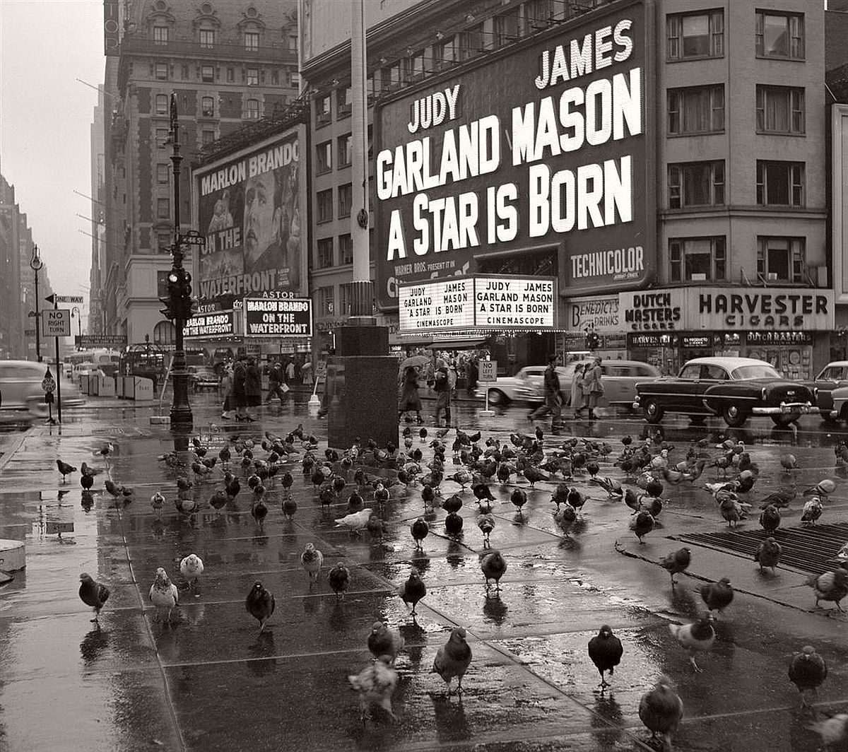 Pigeons gather in Times Square on a rainy day in 1954.