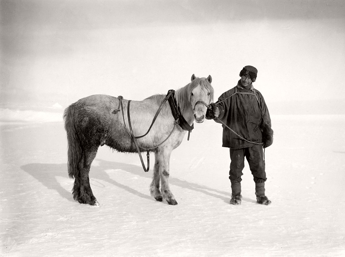 "Assistant zoologist Apsley Cherry-Garrard is seen with his pony, Michael, on October 16, 1911, before the two started on the first leg of the South Pole journey.  The pony ""was as attractive a little beast as we had,"" Cherry-Garrard wrote in his journal, although he ""developed mischievous habits and became a rope-eater and gnawer of other ponies' fringes, as we called the coloured tassels we hung over their eyes to ward off snow-blindness.""  Michael and the other nine ponies died en route to stock up supply depots for Scott and his men on their return journey from the Pole."