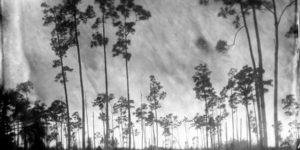 Lisa Elmaleh: Everglades