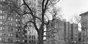 Mitch Epstein: New York Arbor