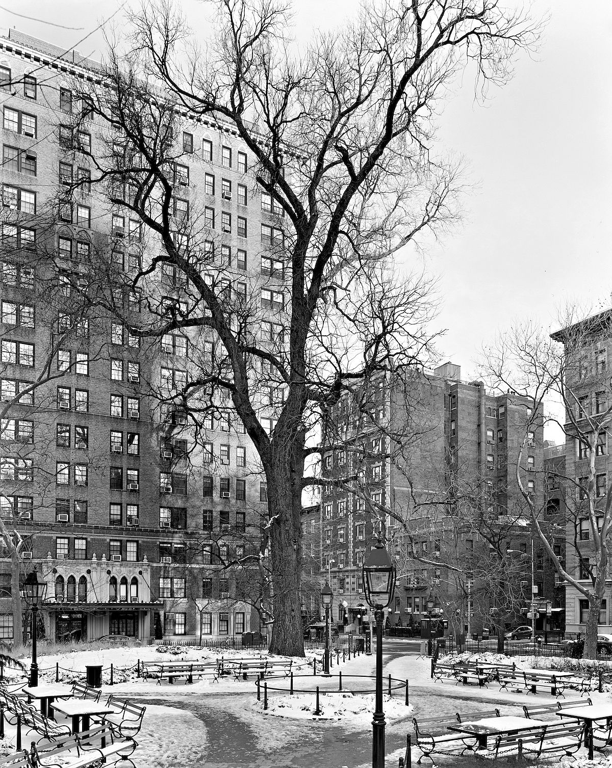 © Mitch Epstein: New York Arbor