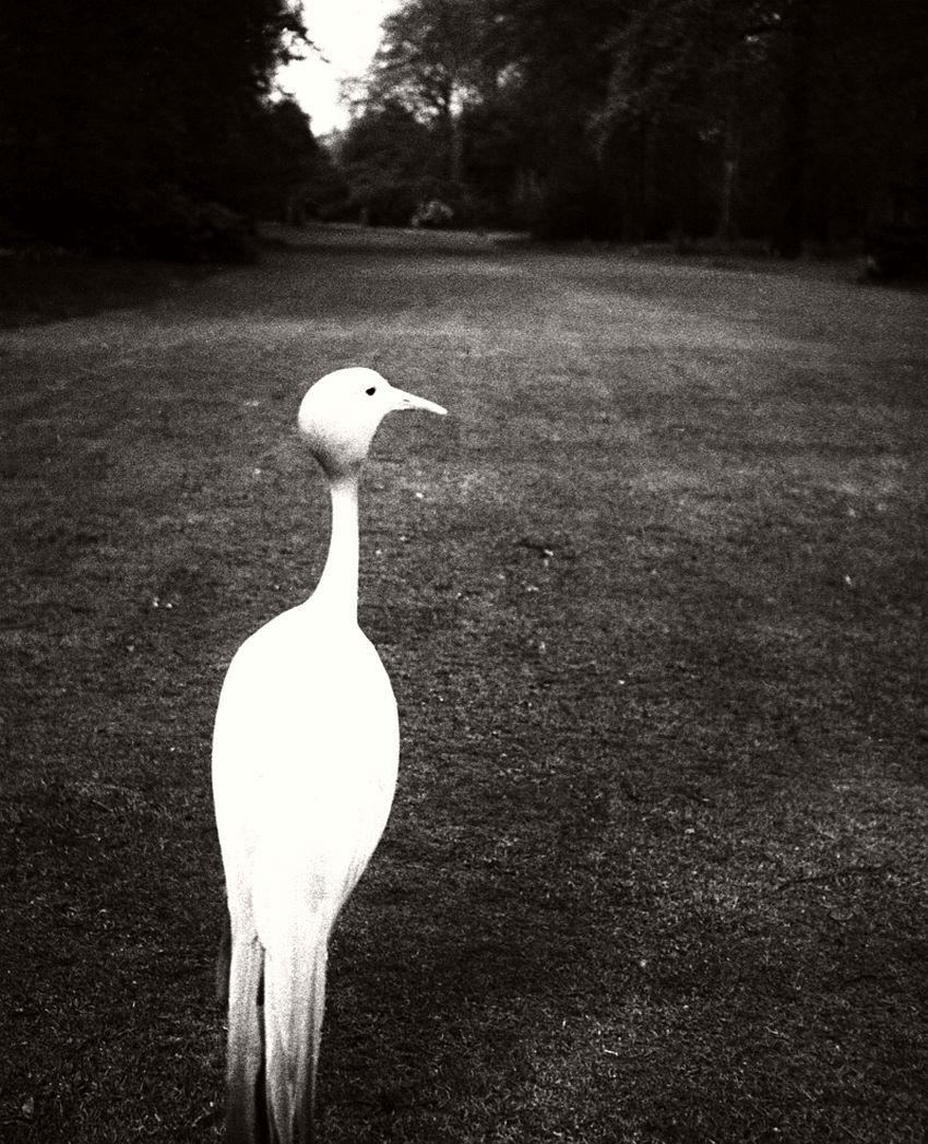 Evening in Kew Gardens, London, ca. 1932-1935.