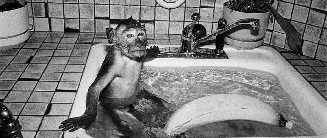 Robin Schwartz: Like Us: Primate Portraits
