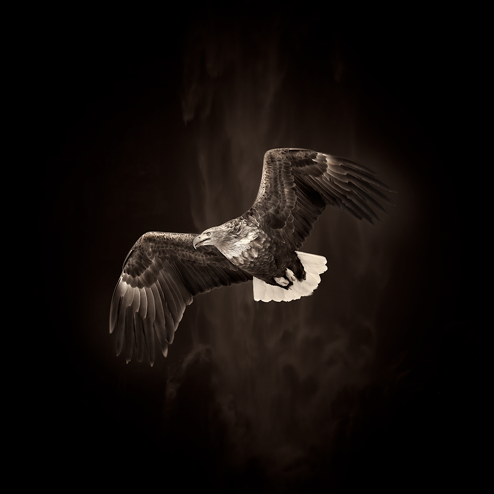 Wildlife-Animals 2ND PLACE WINNER (amateur) 2ND PLACE WINNER Eriko Kaniwa, Flying Eagle
