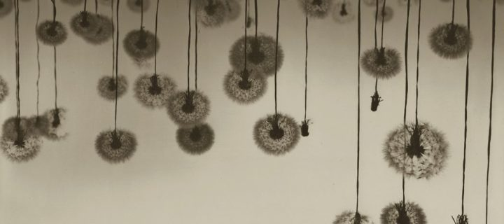 Ryuji Taira: Vicissitudes