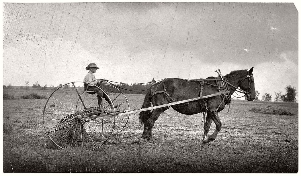 Eight-year-old boy driving horse rake, Western Massachusetts, 1915