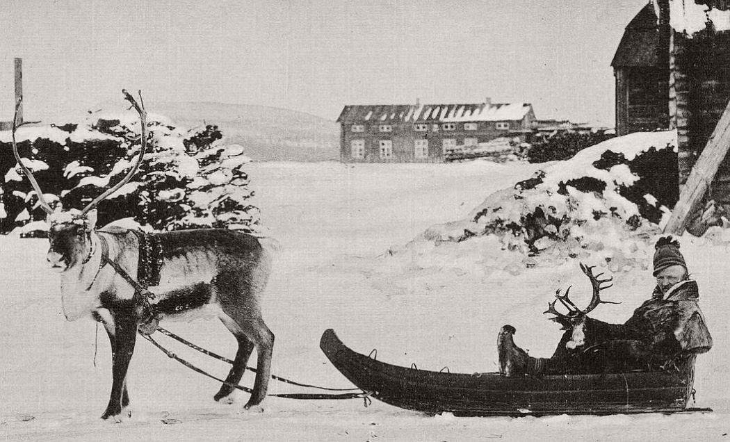 Sami man on Reindeer sledge in Lappland Sweden