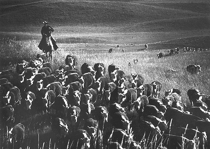 The Last Great Overland Cattle Drive, near Cedar Butte, South Dakota, 1960 - Fidel Castro, Hometown Greetings, 1959