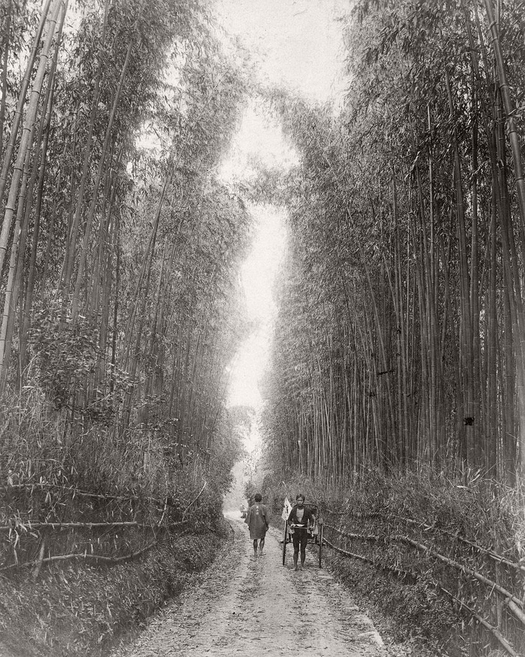 Gojo-zaka bamboo forest, Kyoto, Japan, ca. 1870