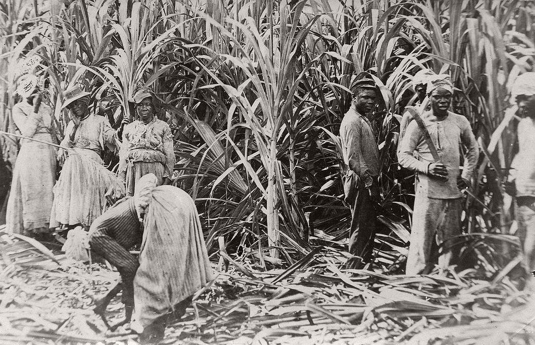 Cane cutters, Jamaica, 1891