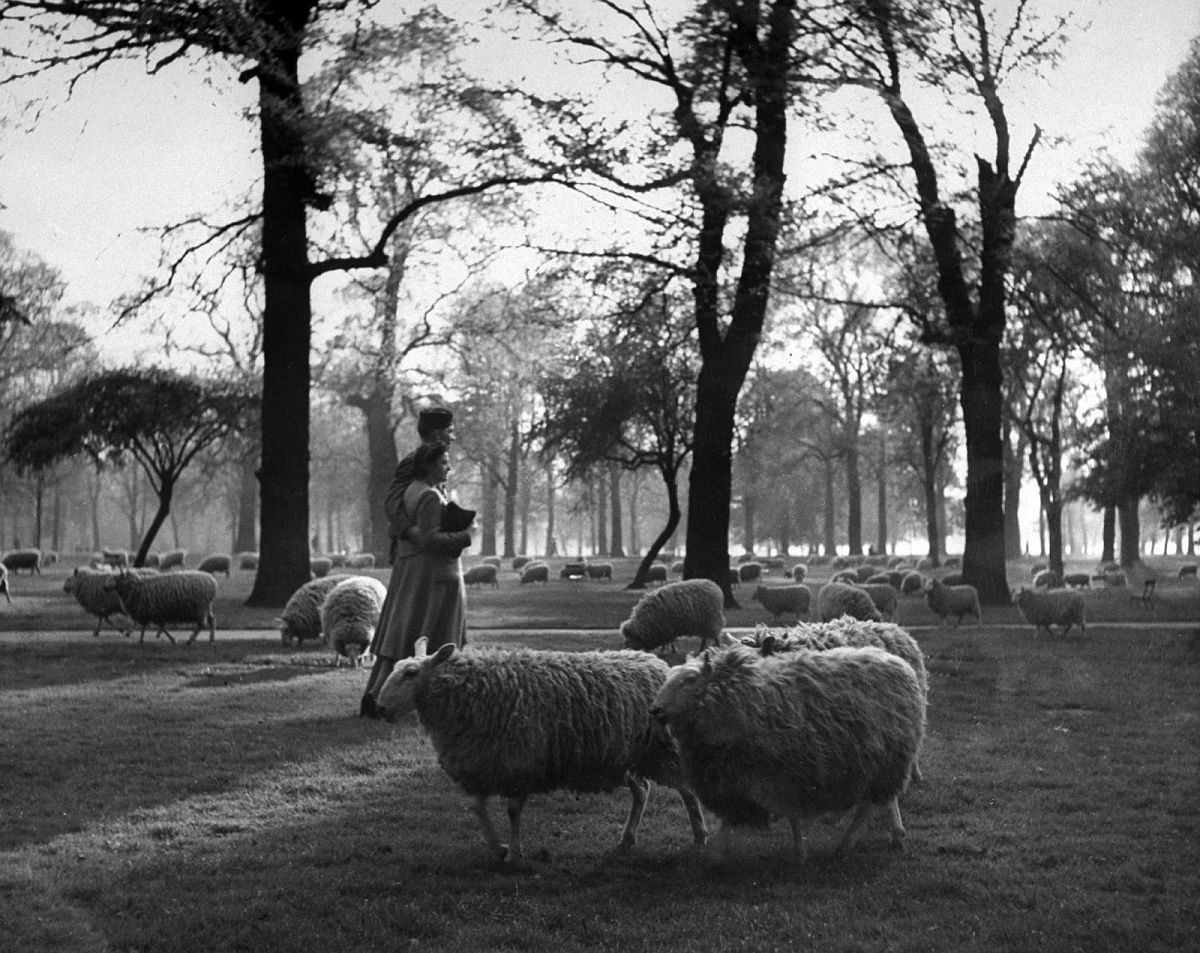 A GI and his girl walk arm-in-arm among the sheep in Kensington Gardens. Gardens adjoin Hyde Park.