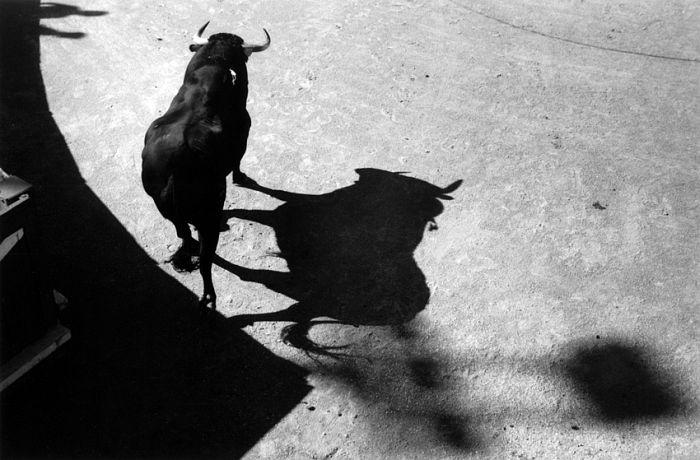 Lucien Clergue Le taureau des ombres Arles, 2009