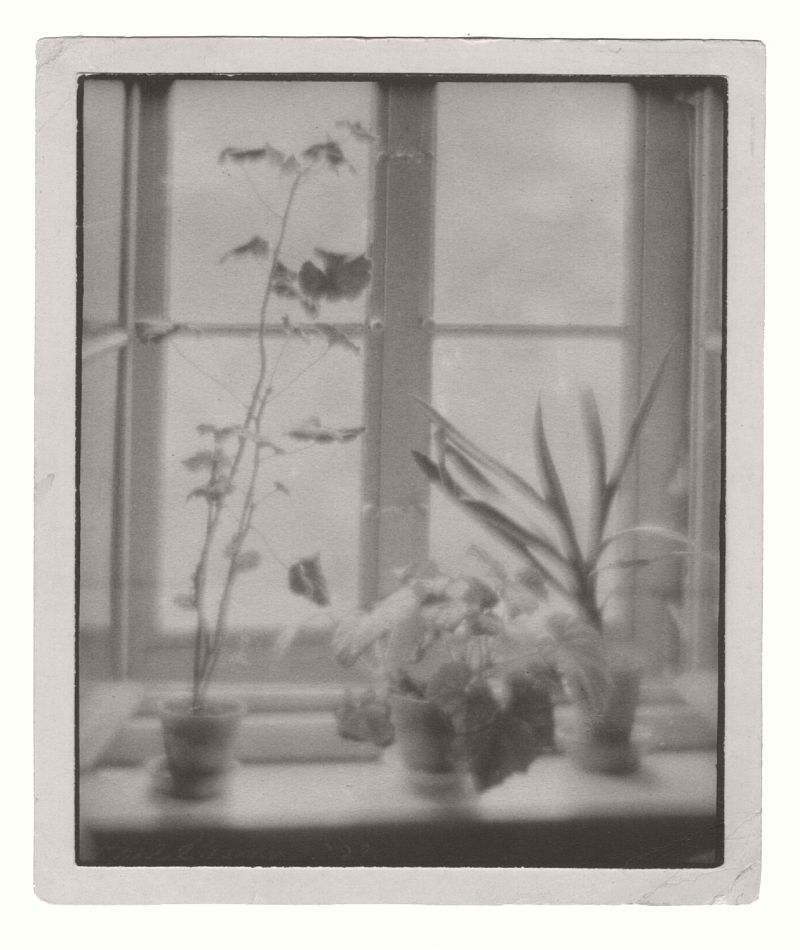STRUSS, Karl (1886-1981), Potted Plants on a Windowsill, 1909
