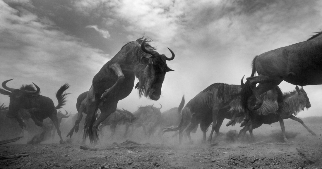 MonoVisions Black & White Photography Awards 2017 - Series Winner - Anup Shah: The Mara