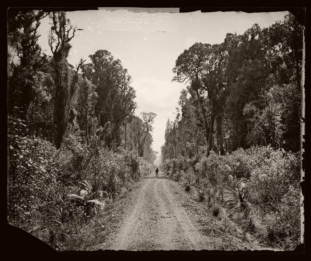 Five Mile Avenue, Forty Mile Bush, 1875.