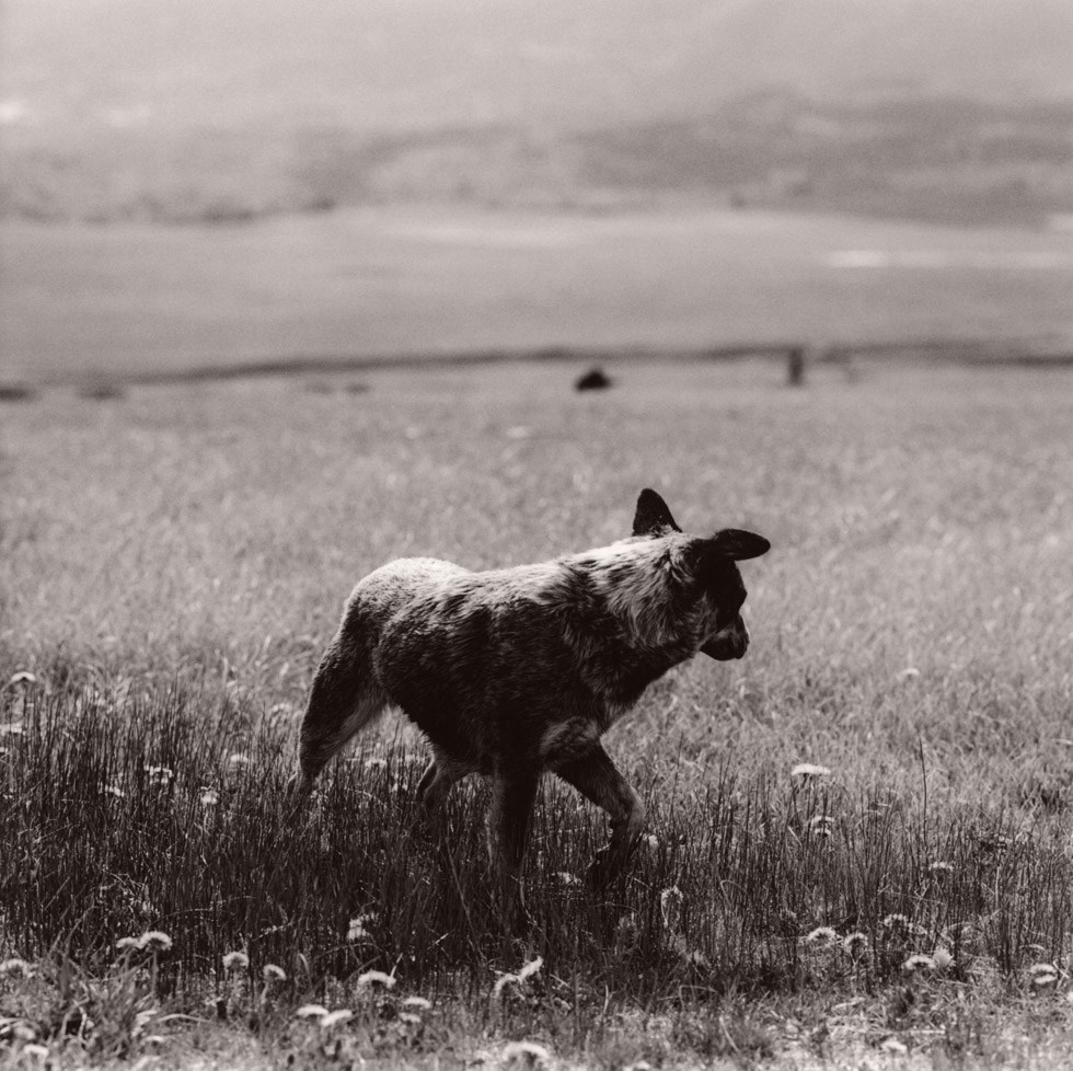 Heeler, Burns, Colorado, 2012