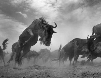 Anup Shah: The Mara