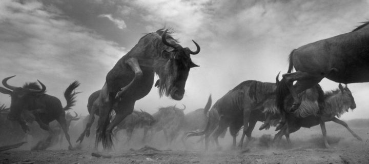 Anup Shah: The Mara