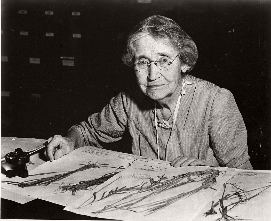 Botanist Mary Agnes Chase (1869-1963) sitting at desk with specimens, 1960