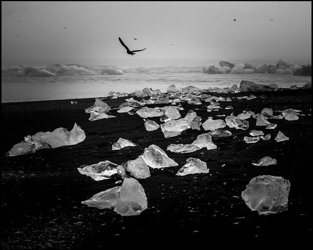 Ice, black sand and birds, Iceland 2015 © Laurent Baheux