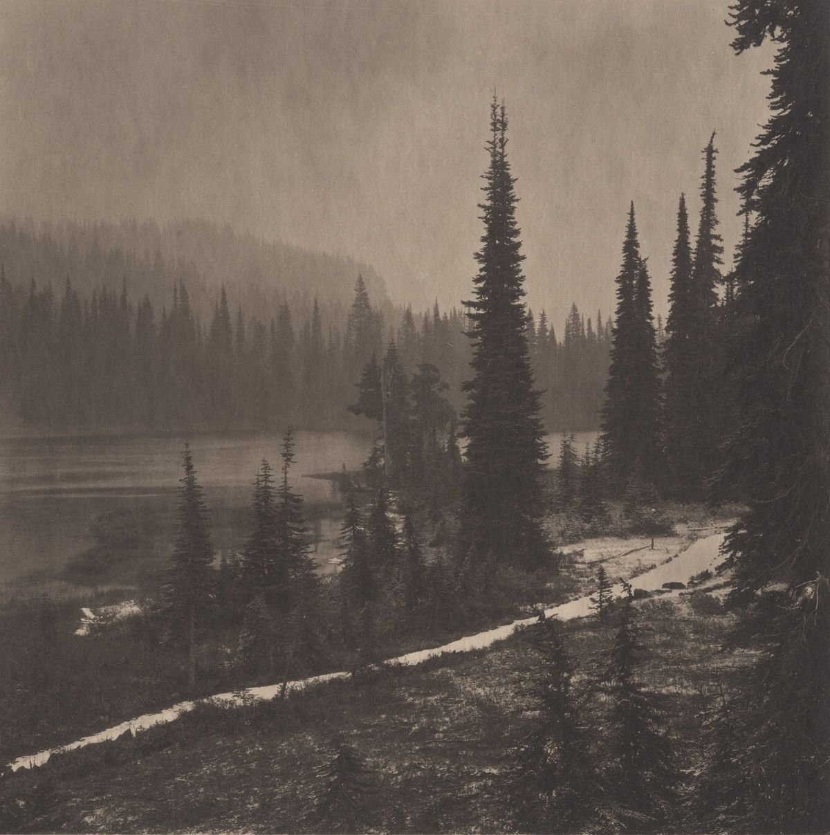 Pacific Northwest: Mt. Rainer #2, 2011/2012 from Silent Respiration of Forests - Pacific Northwest