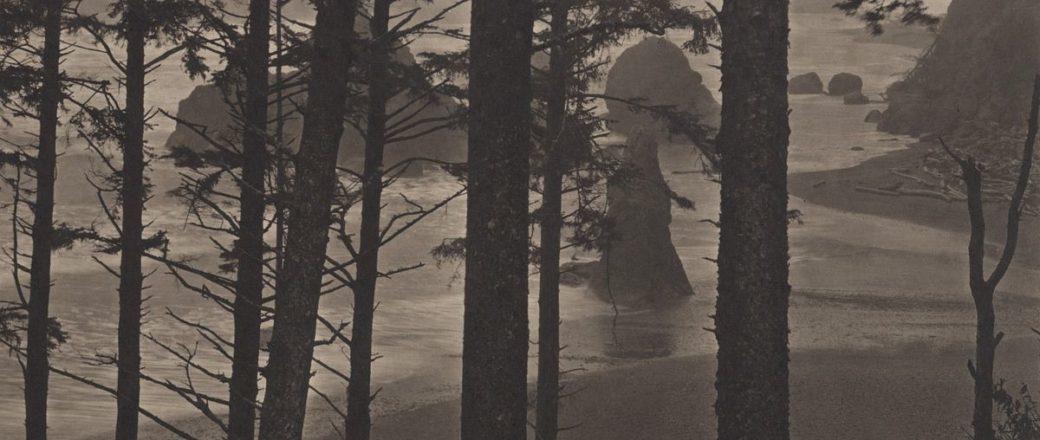Takeshi Shikama: Silent Respiration of Forests