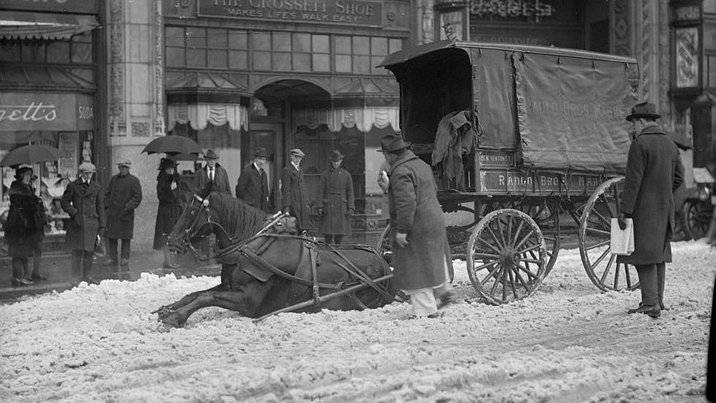 Circa 1910s. Horse pulling wagon slips in snow.