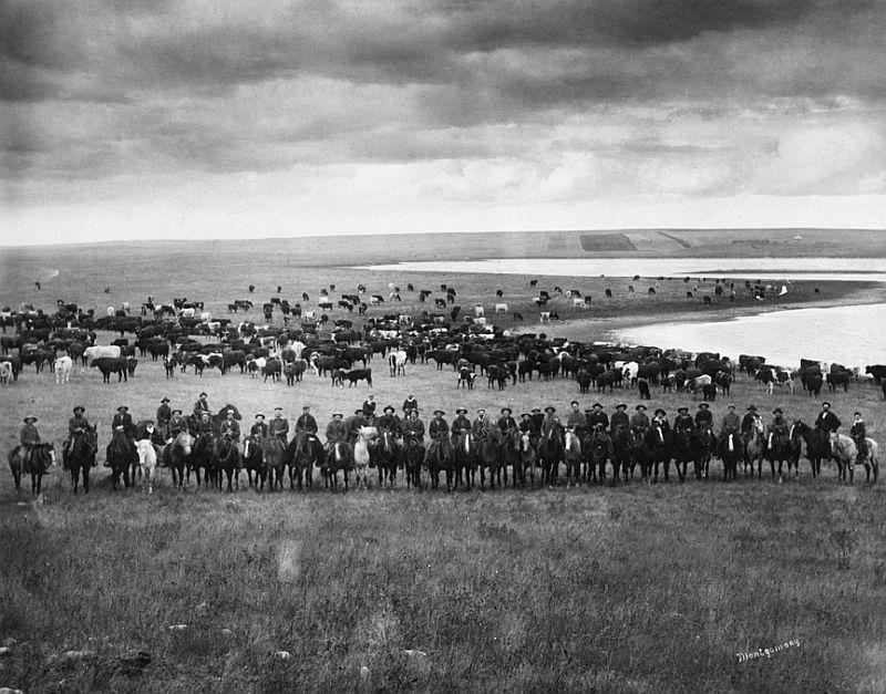 Last Bow River Ranche cattle round-up, near Cochrane, Alberta, 1905-06