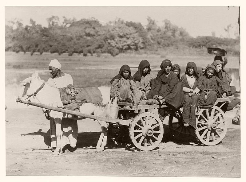 Children on a horse wagon
