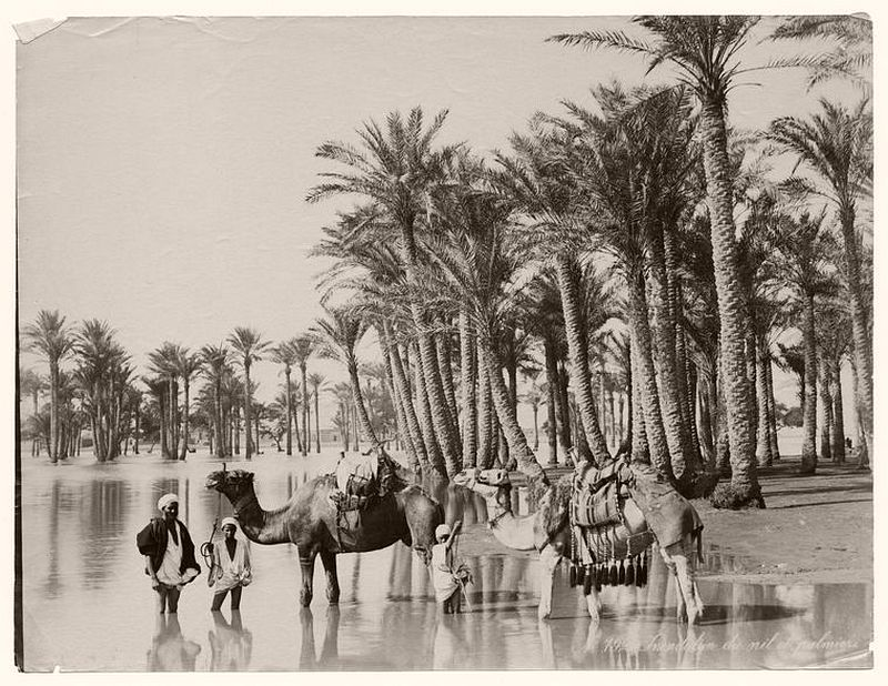 People with their camels on the Nile