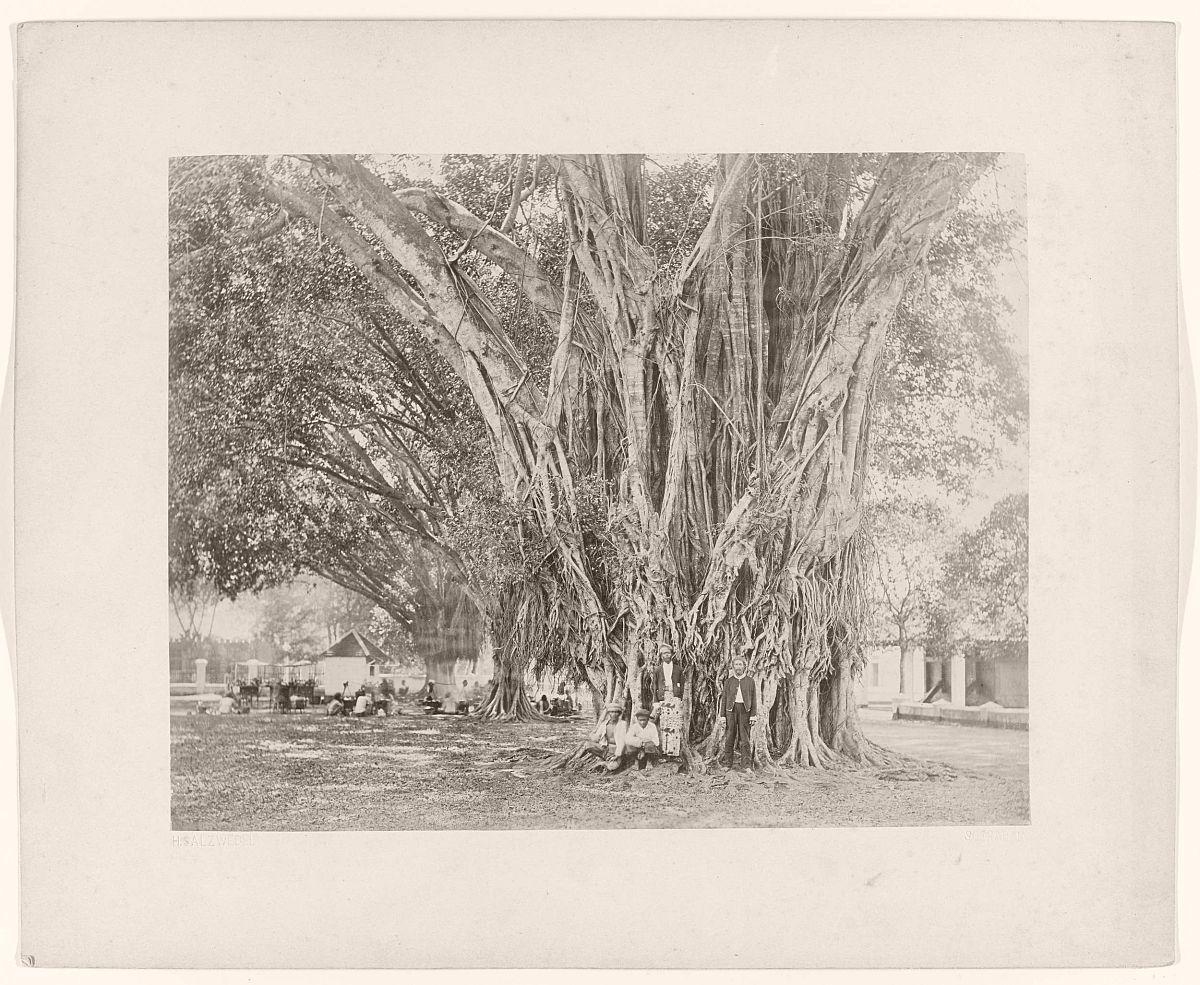 Enkele mannen bij een grote boom.