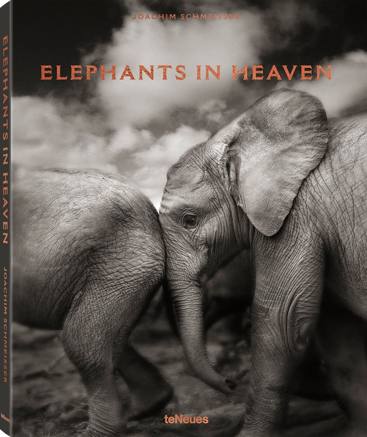 © Elephants in Heaven by Joachim Schmeisser, published by teNeues, www.teneues.com, Suguta, Kenya 2009, Photo © 2017 Joachim Schmeisser.