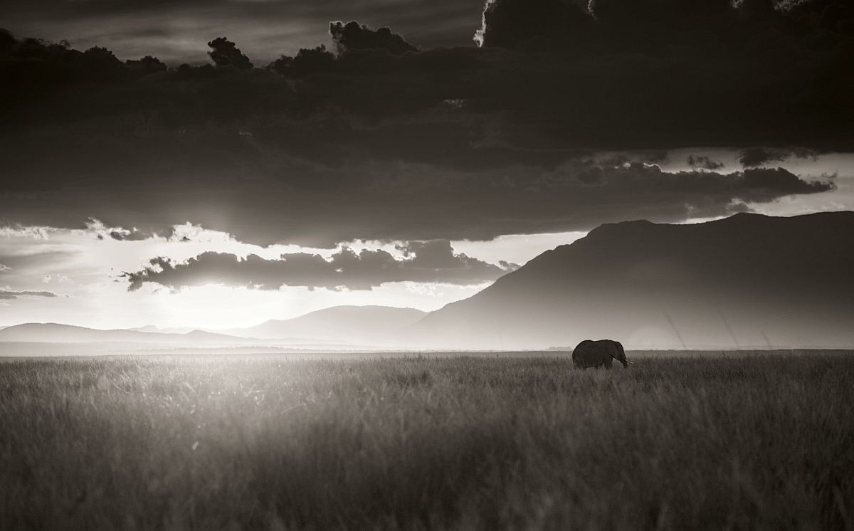 © Elephants in Heaven by Joachim Schmeisser, published by teNeues, www.teneues.com, Elephant walking through tall grass in sunset, Amboseli National Park, Kenya 2017 Photo © 2017 Joachim Schmeisser.