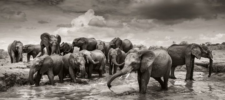 Joachim Schmeisser: Elephants in Heaven