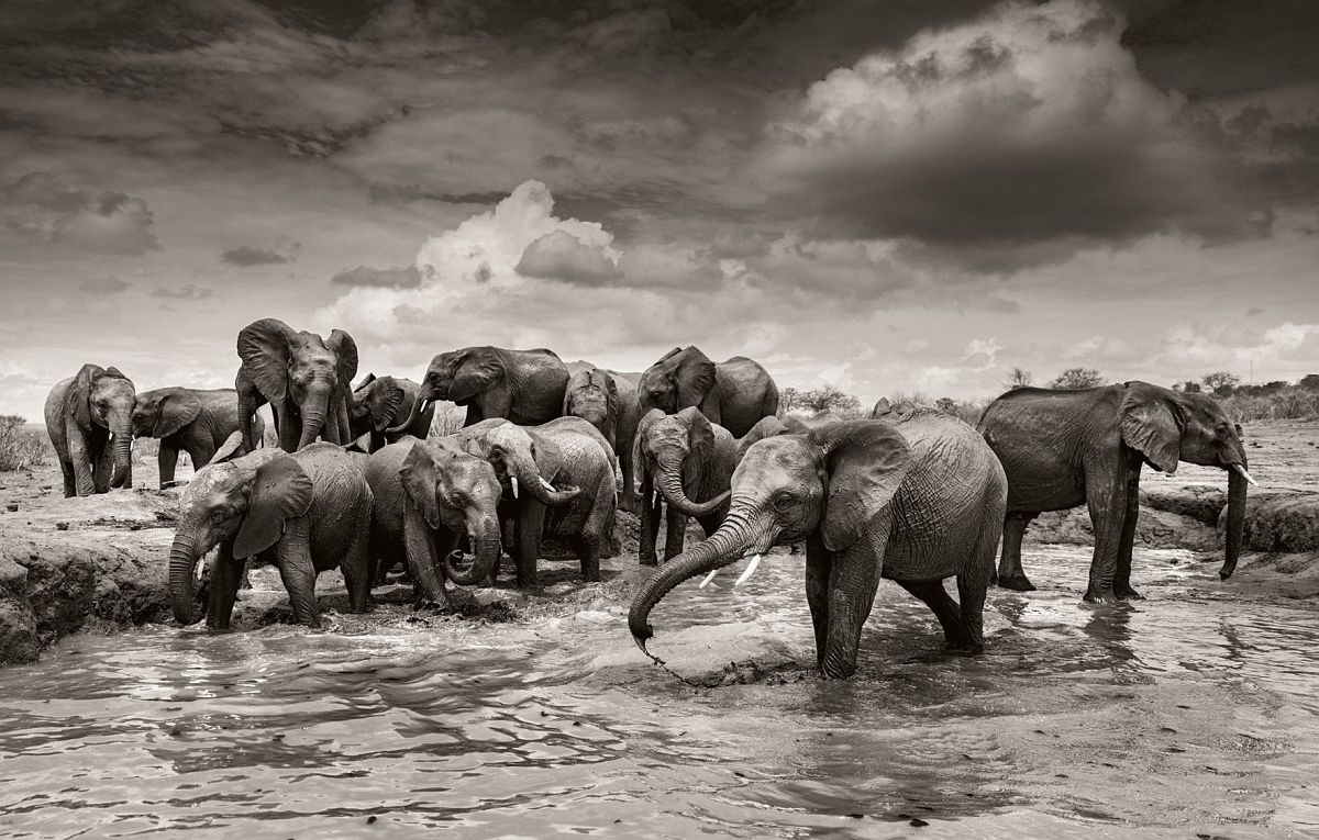 © Elephants in Heaven by Joachim Schmeisser, published by teNeues, www.teneues.com, Mudbath IV, Kenya 2017, Young orphans at the daily mudbath at Ithumba, Tsavo East National Park, Photo © 2017 Joachim Schmeisser.