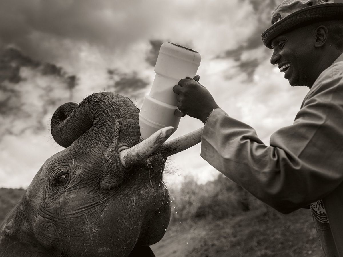 © Elephants in Heaven by Joachim Schmeisser, published by teNeues, www.teneues.com, The caretakers are like surrogate family members to the young elephants, Photo © 2017 Joachim Schmeisser.