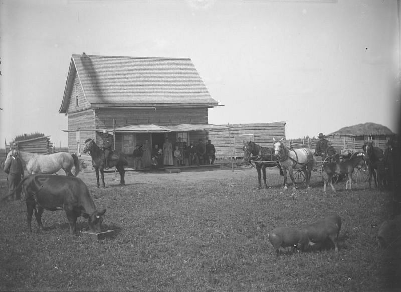 Unidentified homesteaders and farm animals