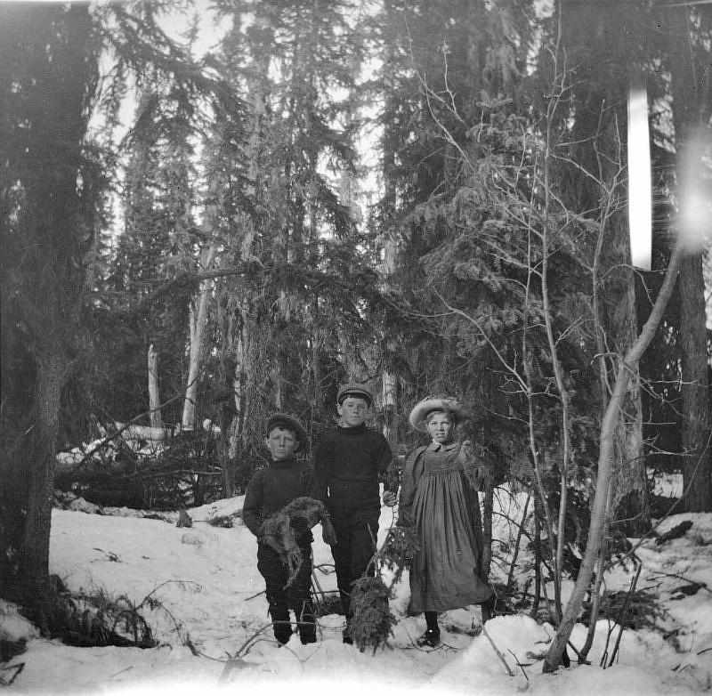 Brebner children in the woods