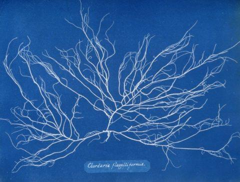 Biography: 19th Century pioneer of Cyanotype photography Anna Atkins
