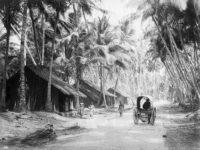 Vintage: Everyday Life of Ceylon (Sri Lanka) in the 1880s