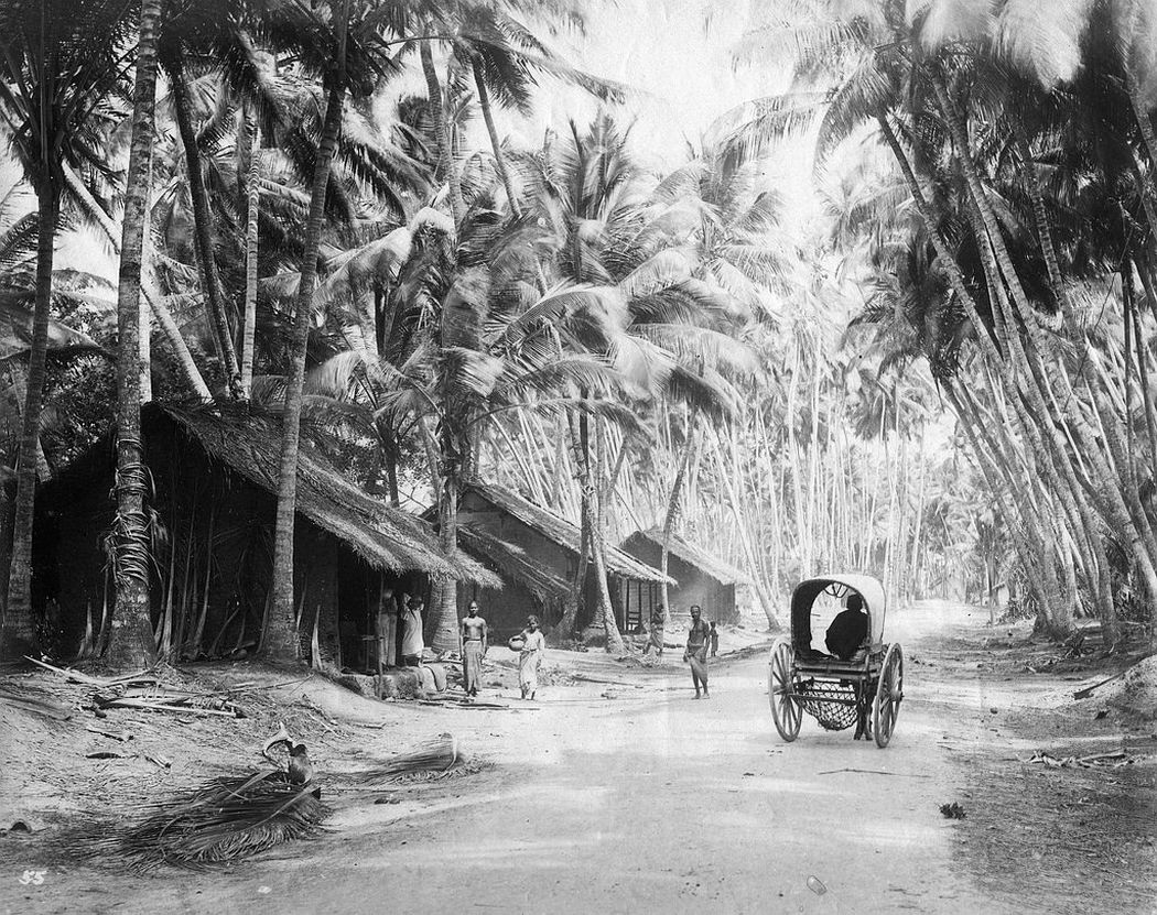 Country road, Colombo, Ceylon, ca. 1880s