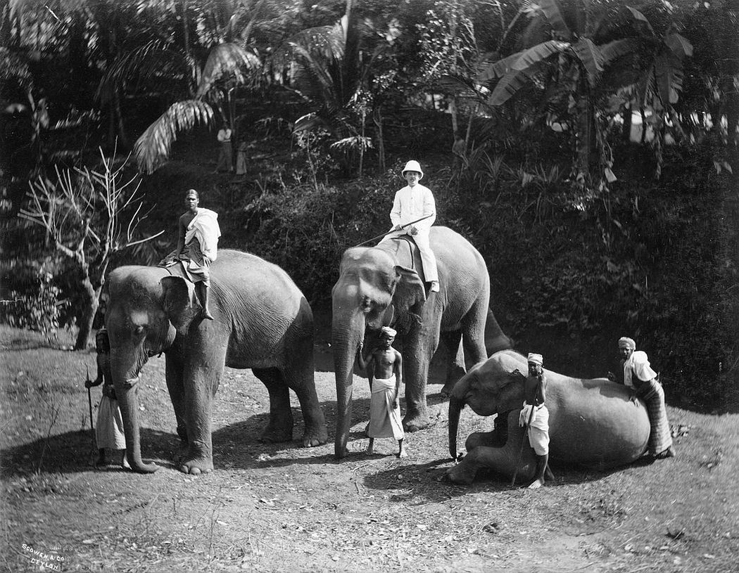 Elephants, ca. 1880s