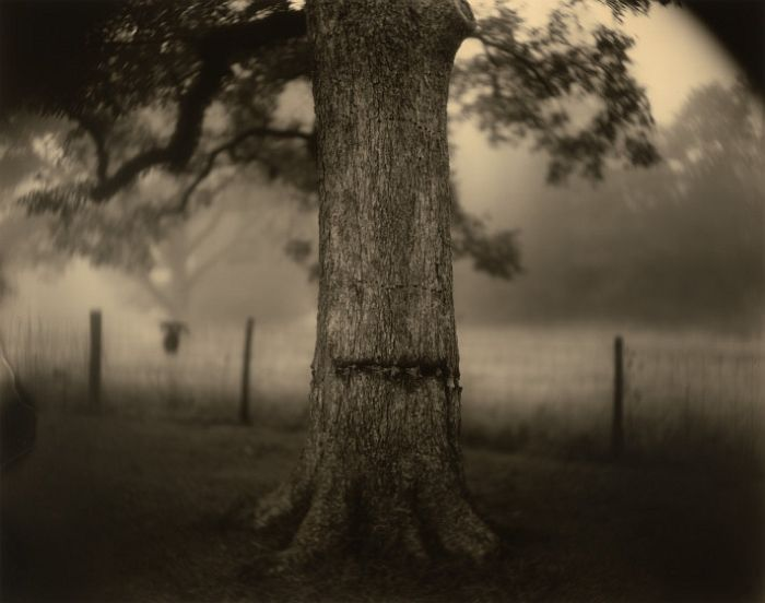 Sally Mann, Deep South, Untitled (Scarred Tree), 1998, gelatin silver print, National Gallery of Art, Washington, Alfred H. Moses and Fern M. Schad Fund. Image © Sally Mann