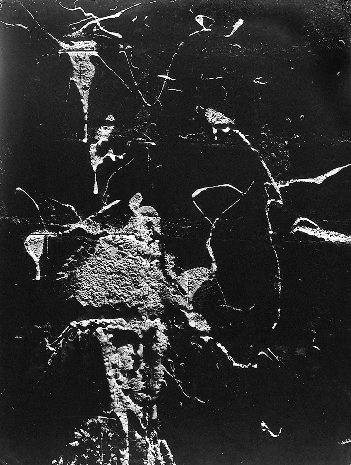 Siskind, Aaron. Chicago, 1948. Gelatin silver print, 16 x 13 3/8 in. (40.6 x 33.9 cm)