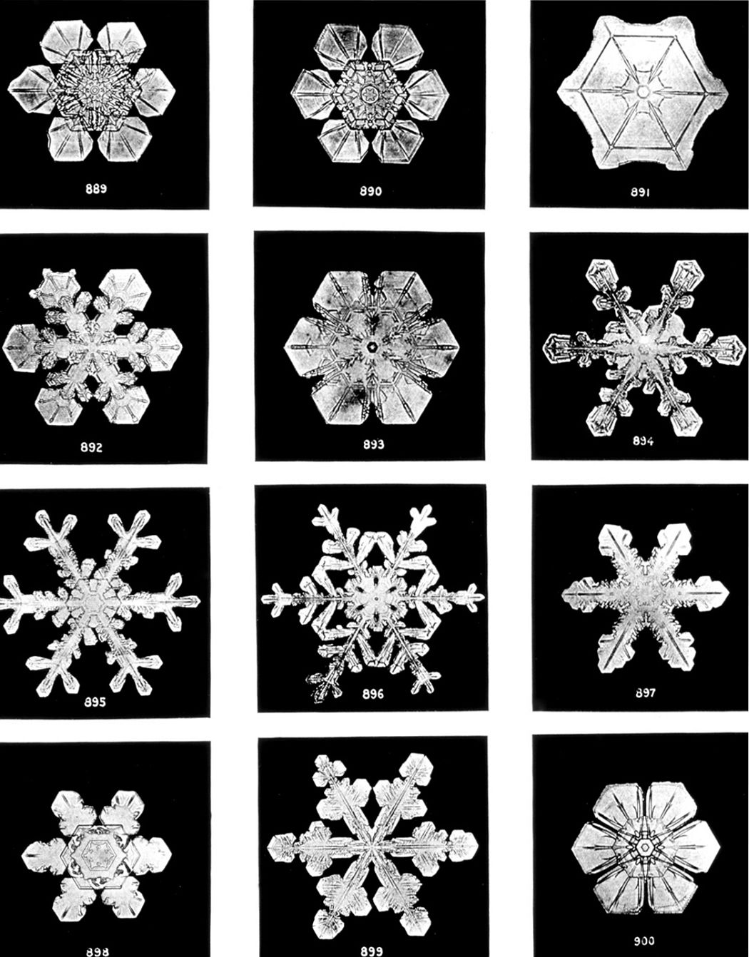 Snowflakes - Wilson Bentley