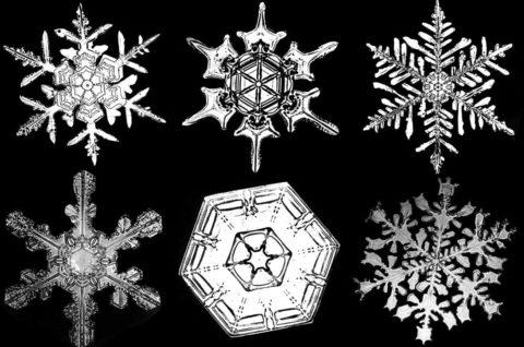 Biography: 19th Century photographer of Snowflakes – Wilson Bentley