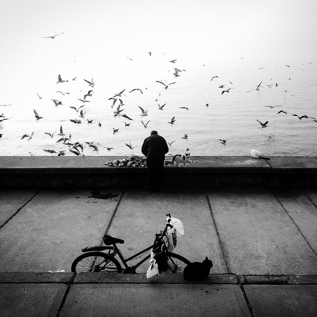 © Sevil Alkan: Stray with me / MonoVisions Photography Awards 2018 winner